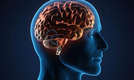 مغز کجا خودخواه می شود؟!