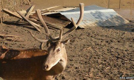 فرار حیوانات از باغ وحش سیل زده تفلیس