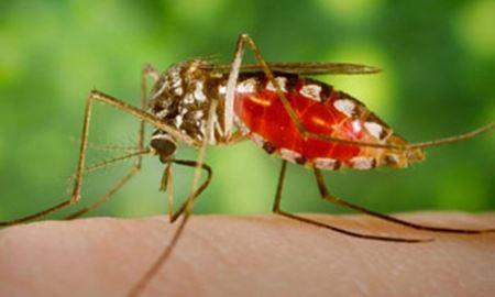 چگونه پشه ها طعمه های خود را انتخاب می کنند؟
