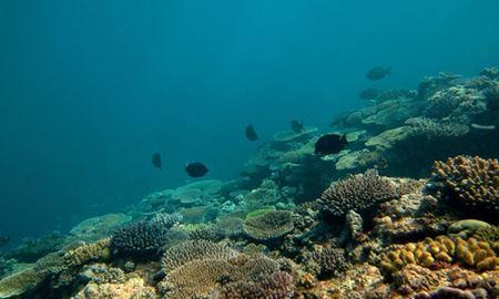 ترفند ماهیها برای فرار از گرما