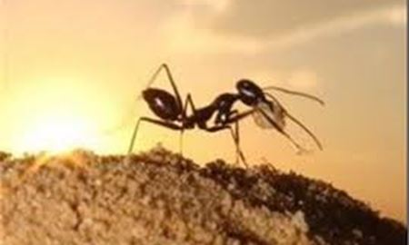 مرد استرالیای که با خوردن مورچه زنده ماند