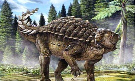 حل معمای فسیل یک دایناسور در استرالیا