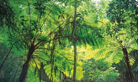 گفتنی ها در باره پیرترین درخت های استرالیا
