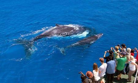 ملبورن ...ویکتوریا،استرالیا / جشنواره ( Whale Watching at Logan's Beach )  از ماه جون تا سپتامبر 2017