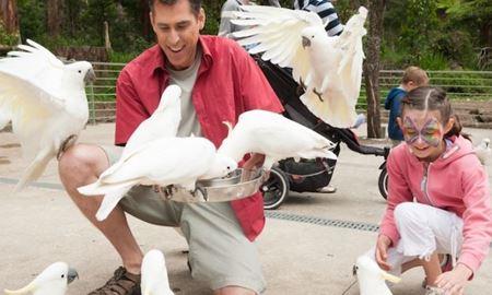 گردشگری استرالیا/ملبورن...ایالت ویکتوریا / پارک ملی دندنونگ ( Dandenong Ranges National Park )