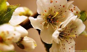 دکلمه های کوتاه و دلنشین/ استقبال از بهار...شعری از فریدون انوشه با صدای شیرین