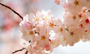 دکلمه های کوتاه و دلنشین/ زمزمه ای در بهار...شعری از شادروان مشیری با صدای شیرین و کورش