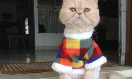 """اعلام نتیجه سری اول """"مسابقه عکاسی از حیوانات خانگی"""""""