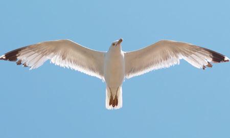 کپیبرداری از بالهای مرغ دریایی برای ساخت توربینهای کوچک توسط محققان استرالیا