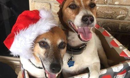 مرگ دو سگ بعد از خوردن خوراکی سمی در حیات خلوت خانه ای در استرالیا
