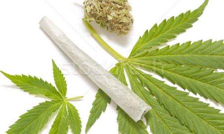 در کانبرا و قلمروی پایتخت استرالیا، مصرف ماریجوانا آزاد شد