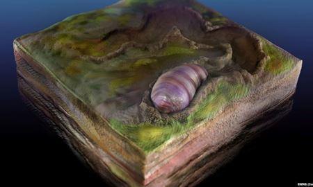 کشف جد ۵۵۵ میلیون ساله تمام موجودات زنده در فسیلی در استرالیا